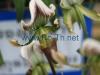 romania thailanda import export