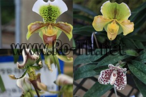 Import de orhidee